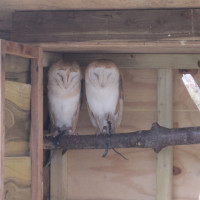 Our owl joins his family at Hobbledown