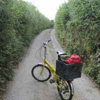 My daily commute through Devon hedges