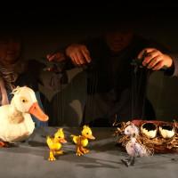 Duckling?